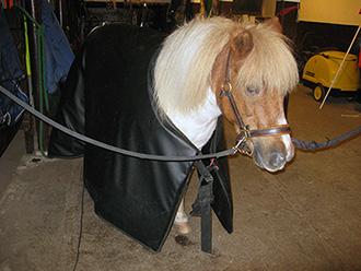 ponny_liten